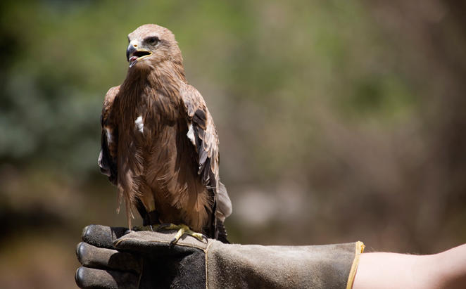 Anantara_The_Palm_Arabian-Bird-of-Prey