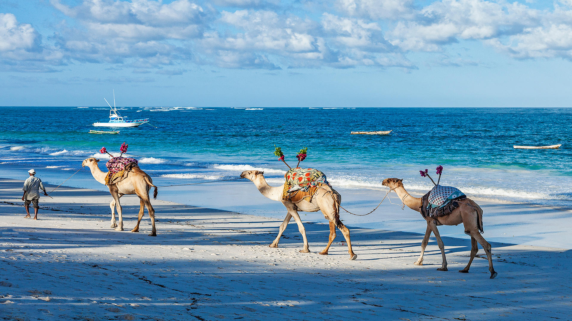 AfroChic_Diani_Beach---Camels-on-the-beach