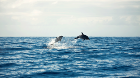 PRIVATE WHALE & DOLPHIN WATCHING TOUR